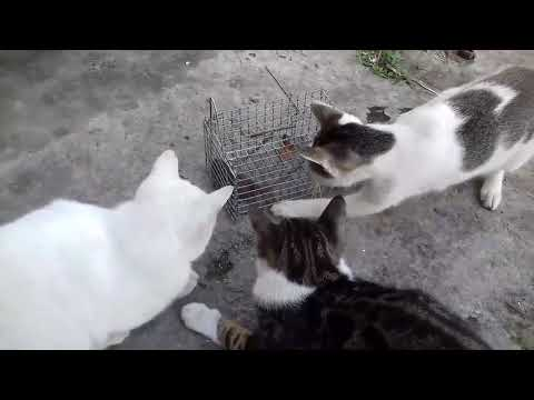 Cat Training - Mouse Catching