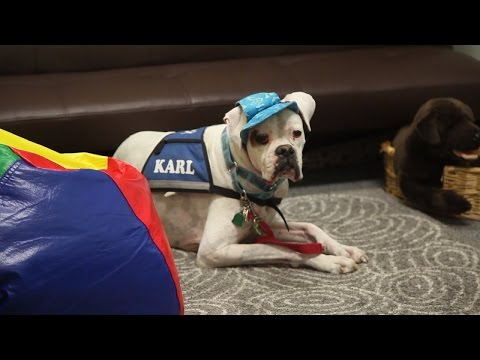 How Therapy Dogs Help Traumatized Kids Face Their Abusers In Court
