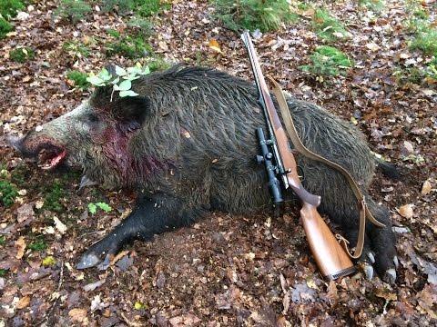 Keiler 123kg - saison 2016-2017 - tir gros sanglier mâle