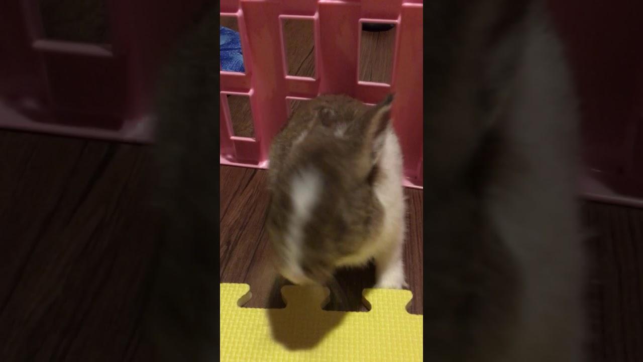 兔子 打噴嚏 惡化版 - YouTube