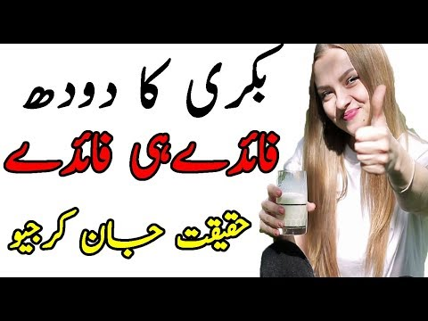 goat-milk-benefits-in-urdu|health-benefits-of-goat-milk-in-urdu-hindi|بکری-کے-دودھ-کے-فائدے