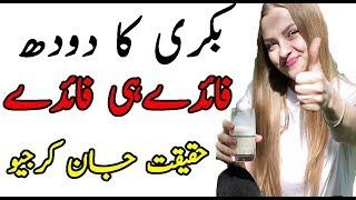 Goat Milk Benefits in Urdu|Health Benefits of Goat Milk in Urdu Hindi|بکری کے دودھ کے فائدے
