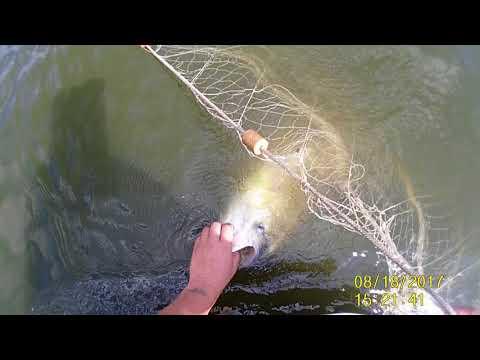 Ловля риби сетями на часному водойoмі 2