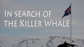 In search of the Killer Whale