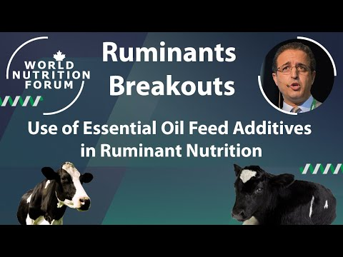 WNF 2016 Ruminants Breakouts: 01 Use of Essential Oil Feed Additives in Ruminant Nutrition