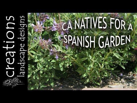 Top 3 California Native Plants For A Spanish Garden