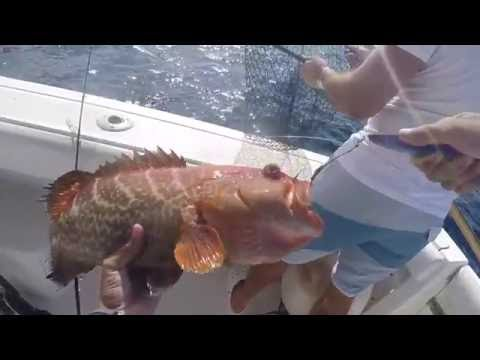 Little Cayman | Fishing The Flats and Vertical Jigging