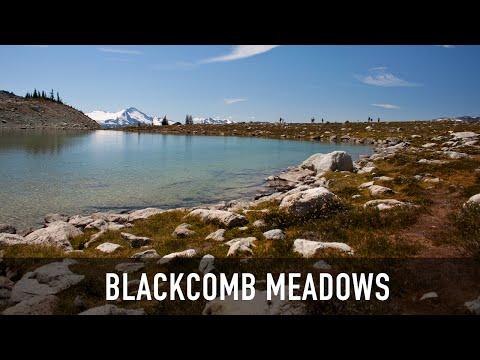 Blackcomb Meadows Hiking Trails Near Whistler, BC