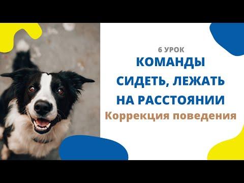 Вопрос: Как научить собаку притворяться мертвой по команде?
