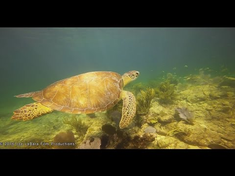 Snorkeling and Free Diving in the Florida Keys