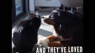 Dog's New Kitten Is Super Annoying And Lovable