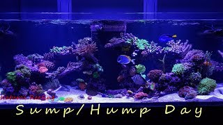 Just sharing how i clean the sump of the Red Sea Reefer 525 XL.