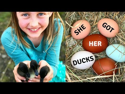We Got New Ducklings!