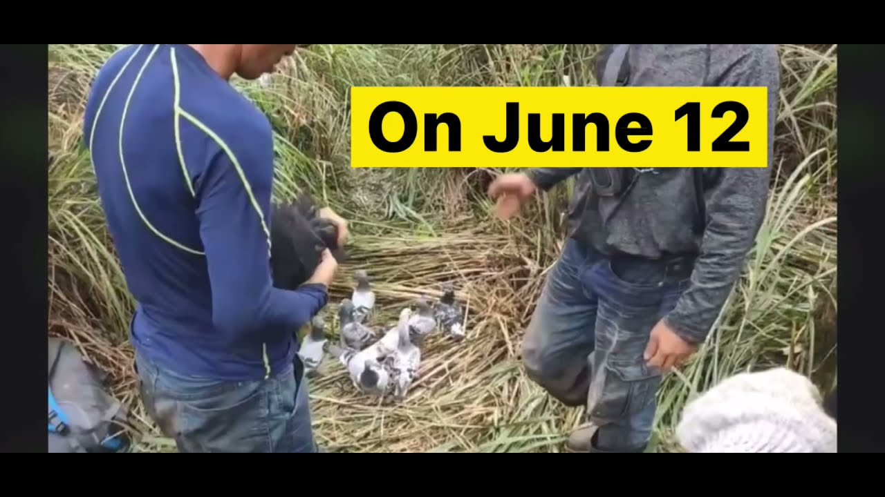 On June 12 - Taiwan Racing Pigeon