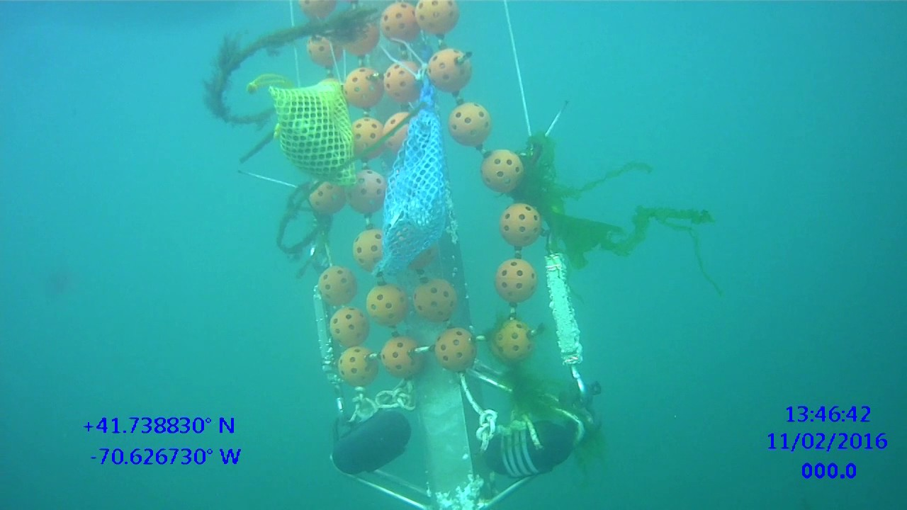 Maha N Haji Extraction Of Uranium From Seawater