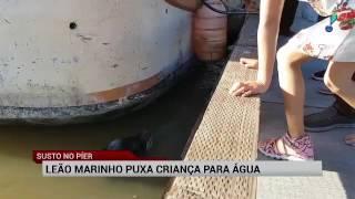 Leão-marinho puxa criança para dentro d'água em parque no Canadá