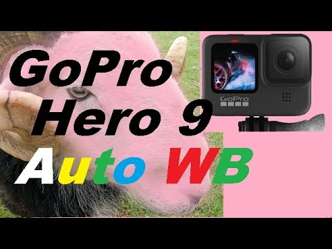 GoPro Hero 9 Auto White Balance with Flat Colour Profile