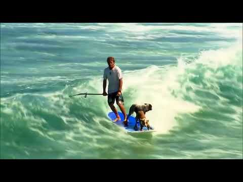 Incredibly, with two dogs surfing together, this man is completely a god of surfing
