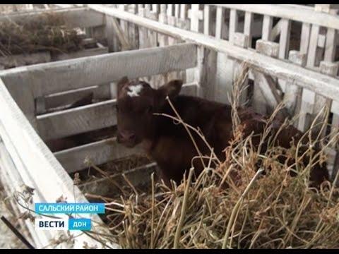 В Ростовской области открылось еще два крупных животноводческих объекта