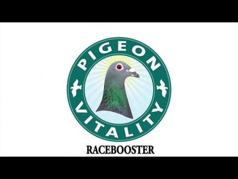 Racing pigeon - Health Tips and Products | Racing Pigeon Supplements