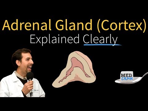 Adrenal Gland Explained Clearly by MedCram.com