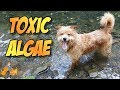 Dog Blue Green Algae Poisoning: a Deadly Summer Danger