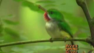 San Pedrito de Puerto Rico canta con barro en el pico