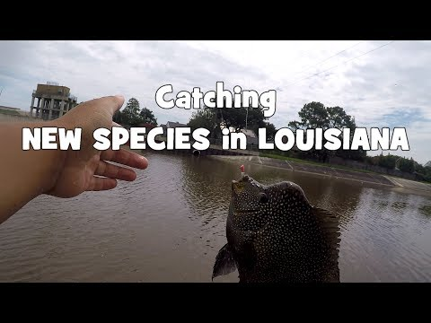 The HUNT for NEW SPECIES Continues in LOUISIANA (Give-Away included) (Metairie, LA)