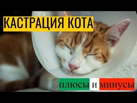 Вопрос: Кастрированные коты живут дольше некастрированных или наоборот (см)?