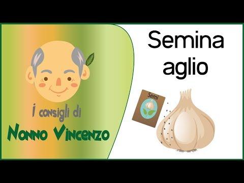 Potatura rose 2 potatura e riproduzione per talea for Oleandro riproduzione