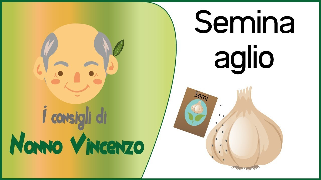 Semina aglio viyoutube for Piantare l aglio