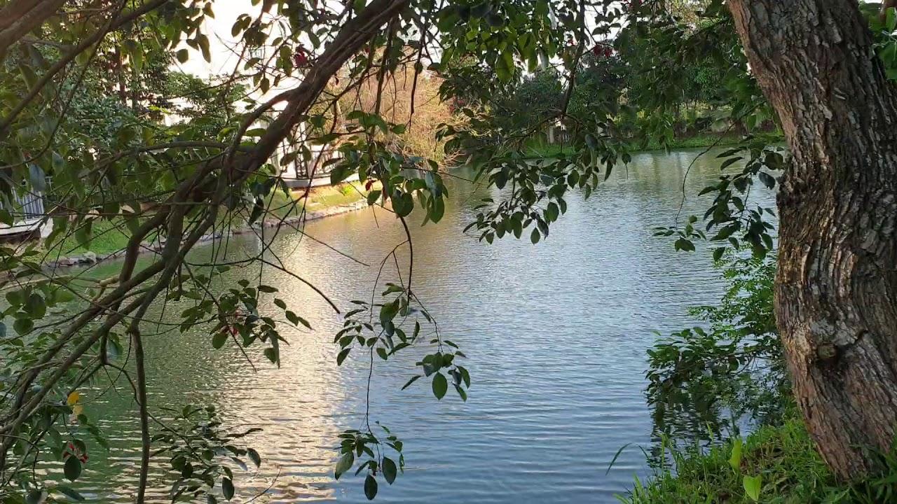 BT Đơn Lập Vinhomes Riverside Hoa Sữa 508m2 TB giá 43 tỷ