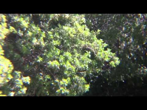SLR-Grade 14x Telephoto Demo