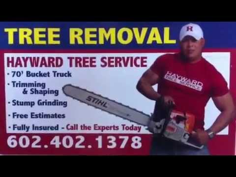 Glendale Arizona Tree Removal, Tree Removal  the same day