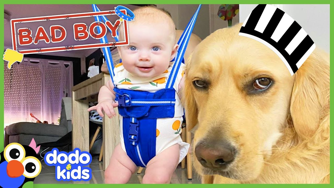 Can A Big Bad Dog Become the Best Big Brother?   Animal Videos For Kids   Dodo Kids