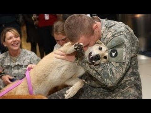 Hunde Begrüßung Soldaten Erstellung 2014 HD