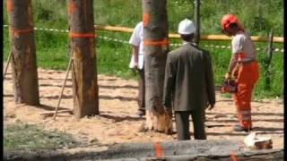 obalanie pali - zawody drwali Lutowiska Bieszczady 8 sierpnia 2009 ( sobota )