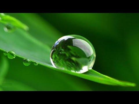 Можно ли поливать дождевой водой комнатные растения?