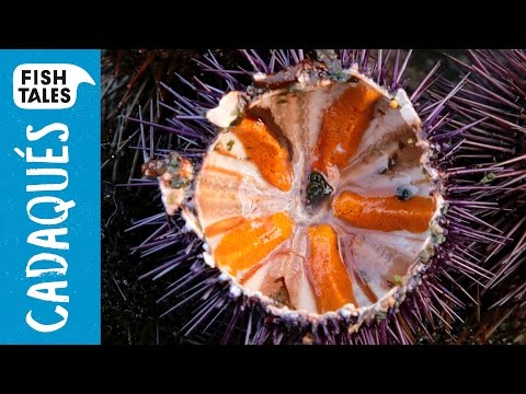 How to open SEA URCHINS? | Bart van Olphen