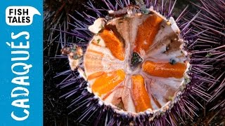 Opening SEA URCHINS | Bart