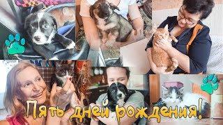 Пять историй пристройства животных с улицы и приюта в семьи animal rescue in Russia