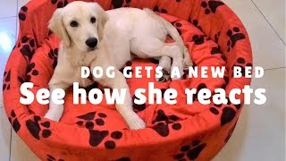 Puppy gets a dog bed - See how she reacts!!! OMG so cute! - Large donut dog beds