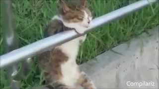 Смешные ролики про кошек. Хит парад 2014. Часть 7. Досмотрите до конца. Обалдеете.