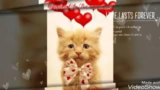 Коты поздравляют с днем святого Валентина