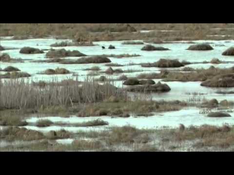 KarsArdahan - TR (2009)