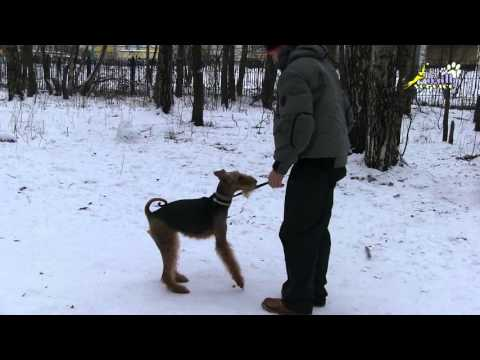 Собака кусает за руки во время игры, как отучить и надо ли отучать