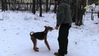 Собака кусает за руки во время игры, как отучить и надо ли отучать(В воспитании собаки очень важно сохранять баланс. Нельзя разрешать собаке больно и неуправляемо кусать..., 2015-12-04T22:28:36.000Z)