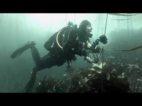 Gods Pocket Diving October 2019