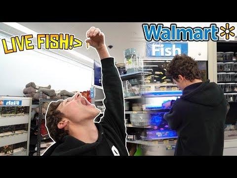 STRAIGHT ARM CHALLENGE IN WALMART!