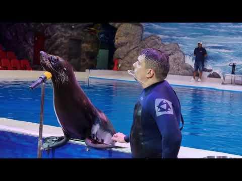 DUBAI DOLPHINARIUM | DOLPHIN & SEAL SHOW | FAMILY ENTERTAINMENT | TOURIST ATTRACTIONS | CREEK PARK